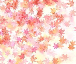 autumn, colours, and fall image