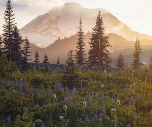 landscape, mountain, and nature image