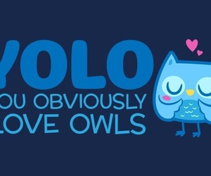 owl, yolo, and cute image