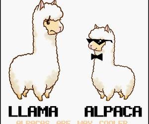 alpaca, llama, and cute image