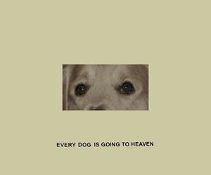 dog, theme, and rp image