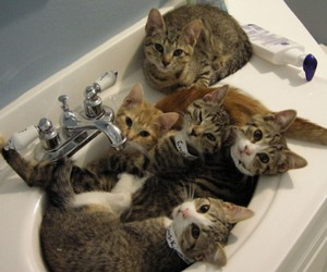 cats, photo, and sink image