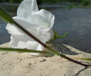 flower, nature, and river image