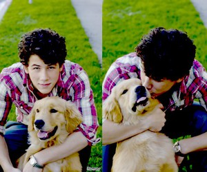 dog, nick jonas, and elvis image