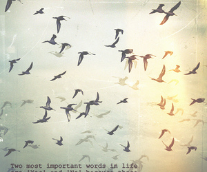 birds, heart, and words image
