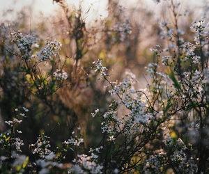flowers, nature, and analog image