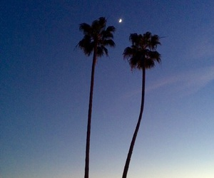 beach, hipster, and palm trees image
