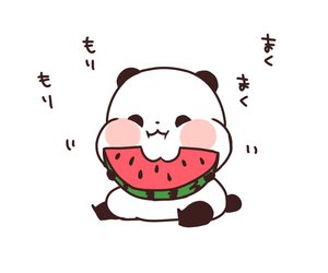 panda, watermelon, and funny image