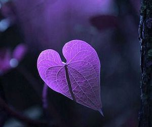 purple, heart, and nature image