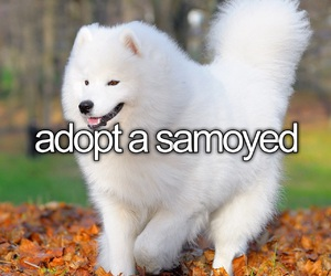 before i die, dog, and lovely image