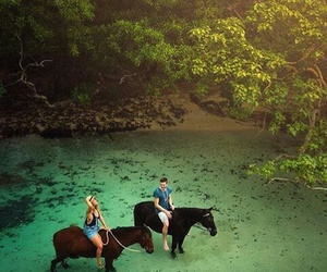 horse, nature, and travel image