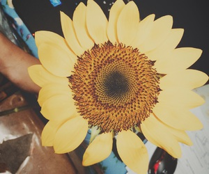 sunflower, surprise gift, and stress reliever image