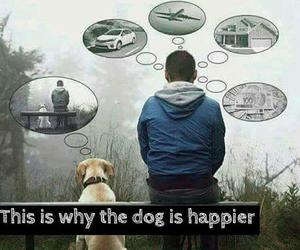 dogs, humans, and love image