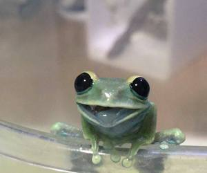 animals, frog, and happy image