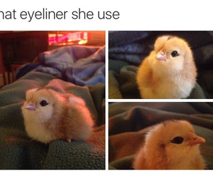 funny and Chick image