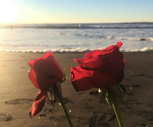 beach, ghetto, and flower image