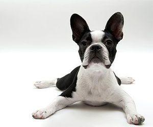adorable, dog, and tiny image