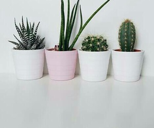 cactus, hipster, and white image
