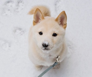 adorable, cutie, and snow image