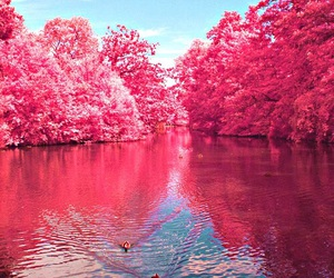 amazing, nature, and pink image