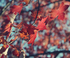 autumn, photography, and red image