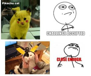 cat, funny, and pikachu image