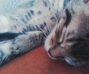 beautifull, cat, and neko image