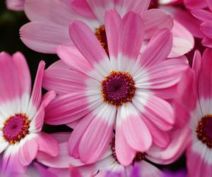 flower, japan, and 京都府立植物園 image