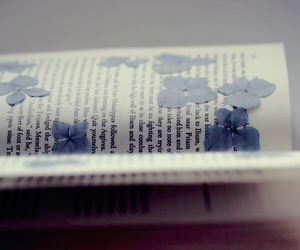 blue, books, and color image
