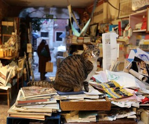 books, bookstore, and cat image