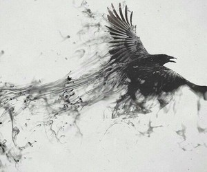 bird, black, and art image