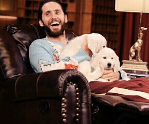 30 seconds to mars, cuteness overload, and harley quinn image