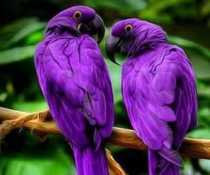 naturaleza, awesome amazing, and hermosura image