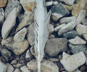 feather and stones image