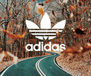 adidas, autumn, and colorful image
