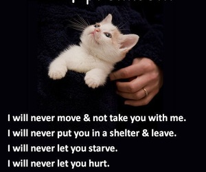 take care, cat, and cat owner image