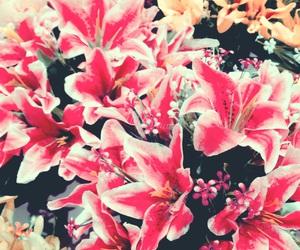 flower, florest, and header image