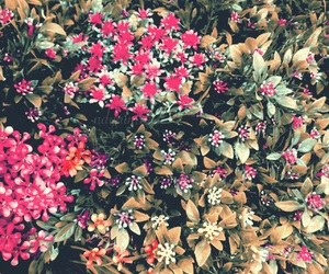 flower, header, and icons image