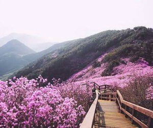 beautiful places, flowers, and paradise image