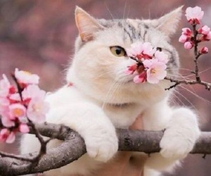 cat, flower, and pink image