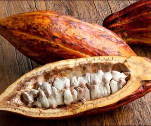 chocolate recipes, fair trade chocolate, and cocoa pods image