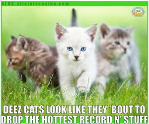 cat, funny cat, and thug cats image