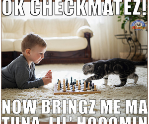 cat, chess, and funny cat image
