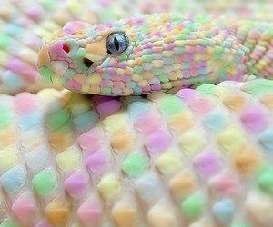 snake, pastel, and animal image