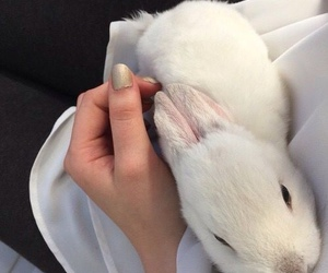 white, rabbit, and cute image