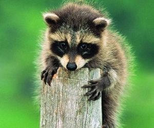 animal, nature, and cute image