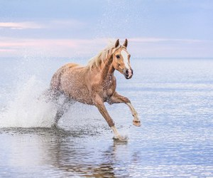 beach, horse, and sea image