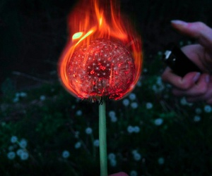 fire, flowers, and dandelion image