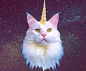 cat, unicorn, and galaxy image