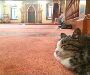 animal, mosque, and kedi image